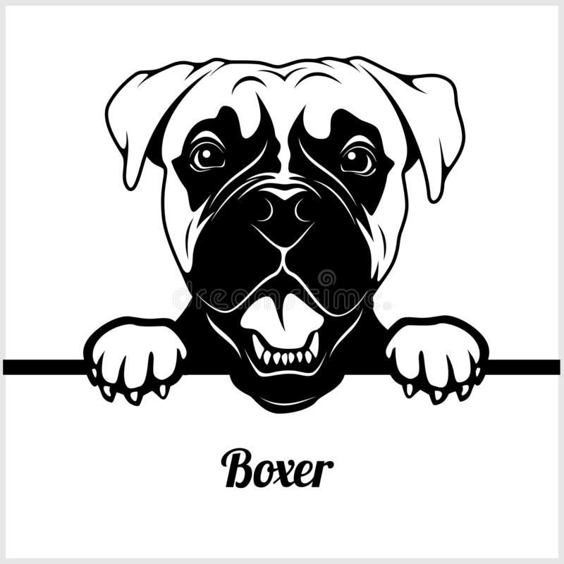 Boxer - Peeking Dogs - - breed face head isolated on white stock illustration
