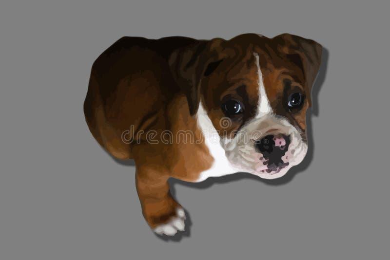 Boxer puppy royalty free illustration