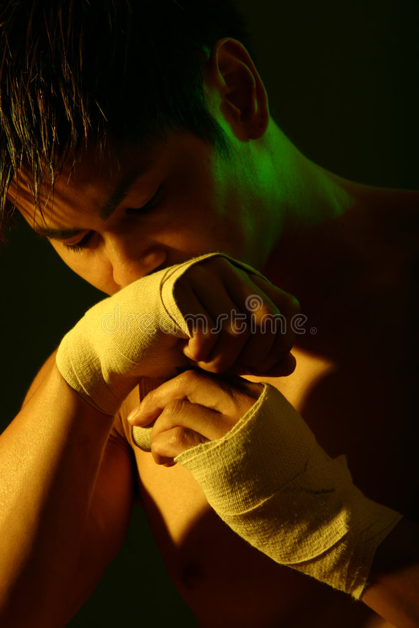 Boxer series royalty free stock images