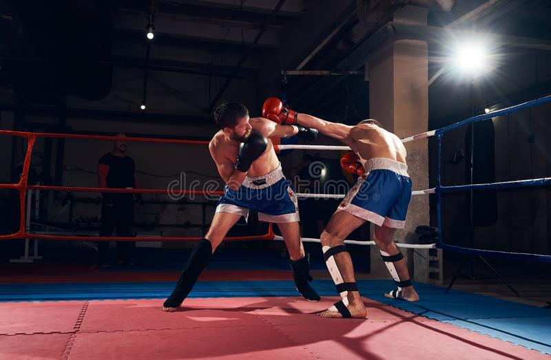 Boxers training kickboxing in the ring at the health club stock photography