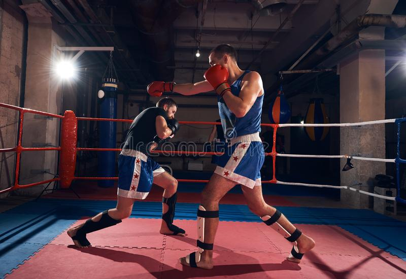 Boxers training kickboxing in the ring at the health club royalty free stock photography