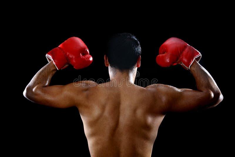 Boxertorso lizenzfreie stockbilder