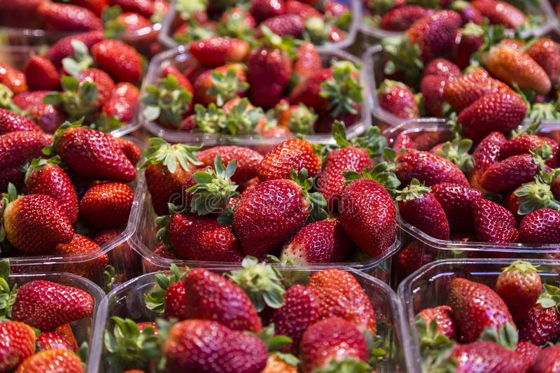 Boxes of bright fresh strawberry. In the market royalty free stock images