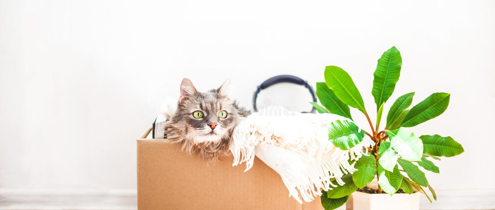 Boxes for moving with things, a cat in a box, a flower in a pot. Garage sale concept Copy space. Banner stock image