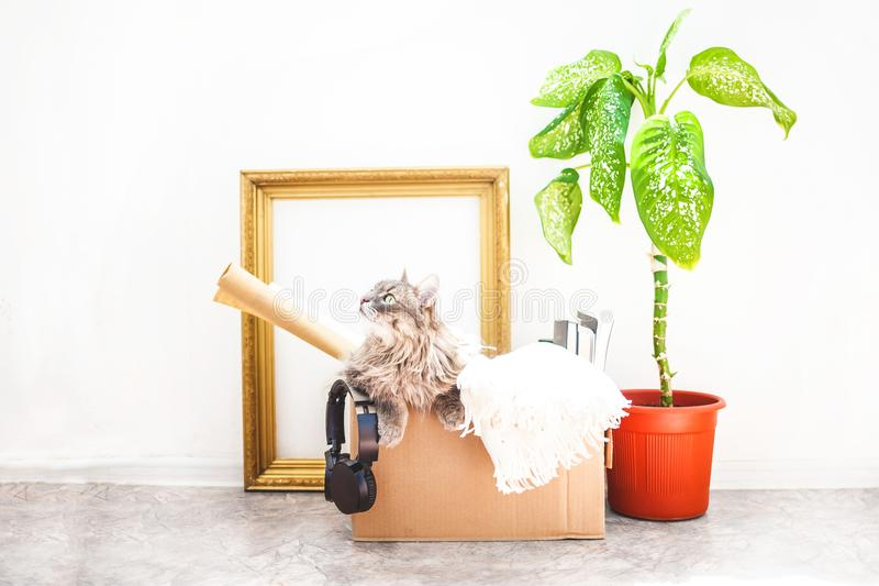 Boxes for moving with things, a cat in a box, a flower in a pot, old frame on a white background Garage sale concept Copy space royalty free stock photography