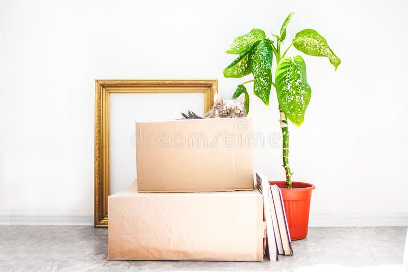Boxes for moving with things, a cat in a box, a flower in a pot, old frame on a white background Garage sale concept Copy space.  royalty free stock image