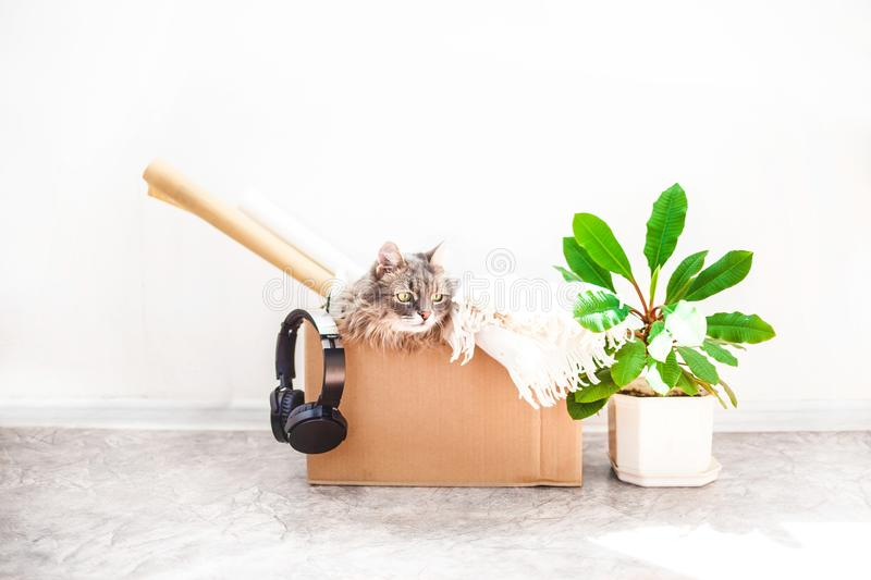 Boxes for moving with things, a cat in a box, a flower in a pot on a white background Garage sale concept Copy space. Boxes for moving with things, a cat in a stock photography