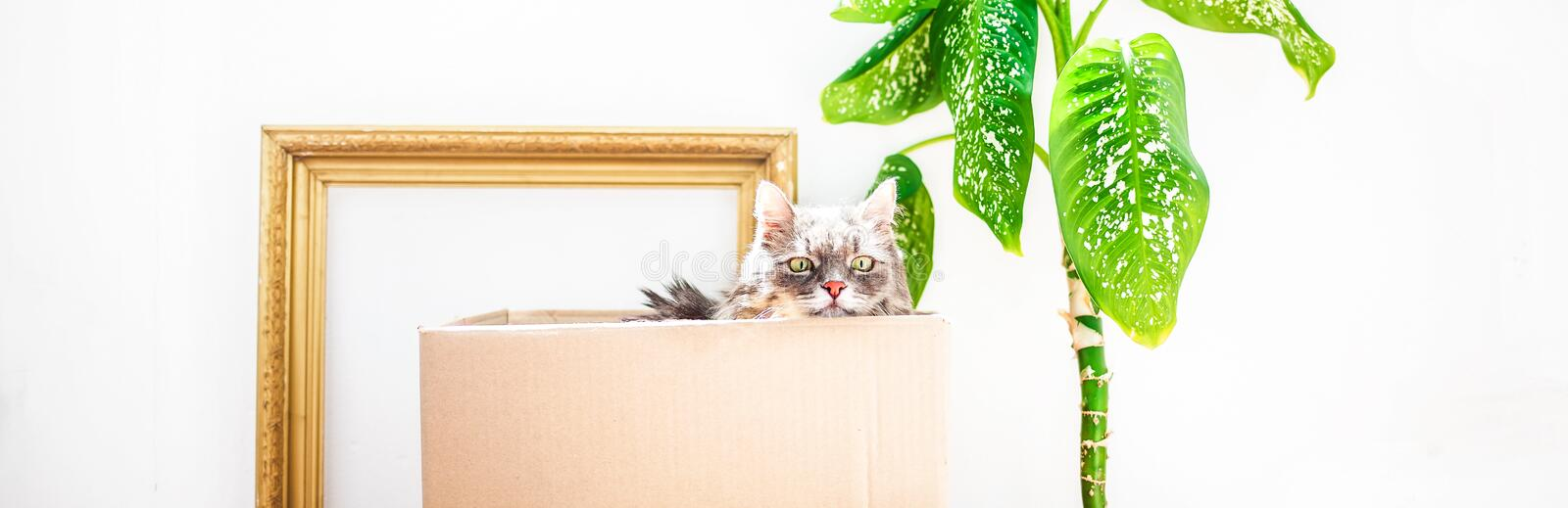 Boxes for moving with things, a cat in a box, a flower in a pot on a white background Garage sale concept Copy space Banner.  royalty free stock photo