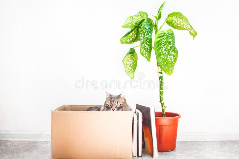 Boxes for moving with things, an evil cat in a box, a flower in a pot on a white background Garage sale concept Copy space.  stock images
