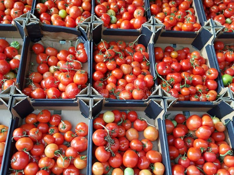 boxes tomater royaltyfria foton