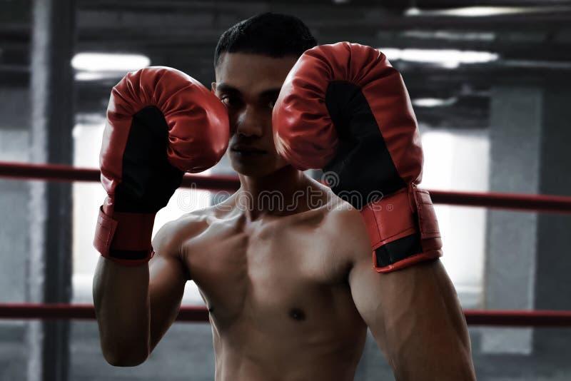 Boxeur asiatique dans l'anneau photos libres de droits