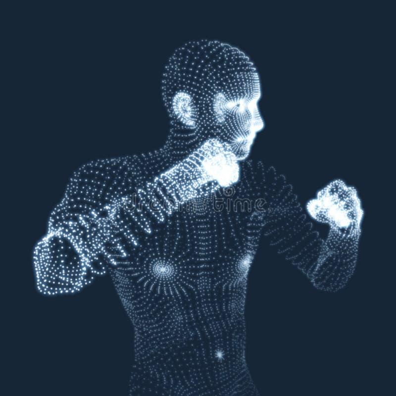 boxeur Homme de combat modèle 3D de l'homme Modèle de corps humain illustration de vecteur