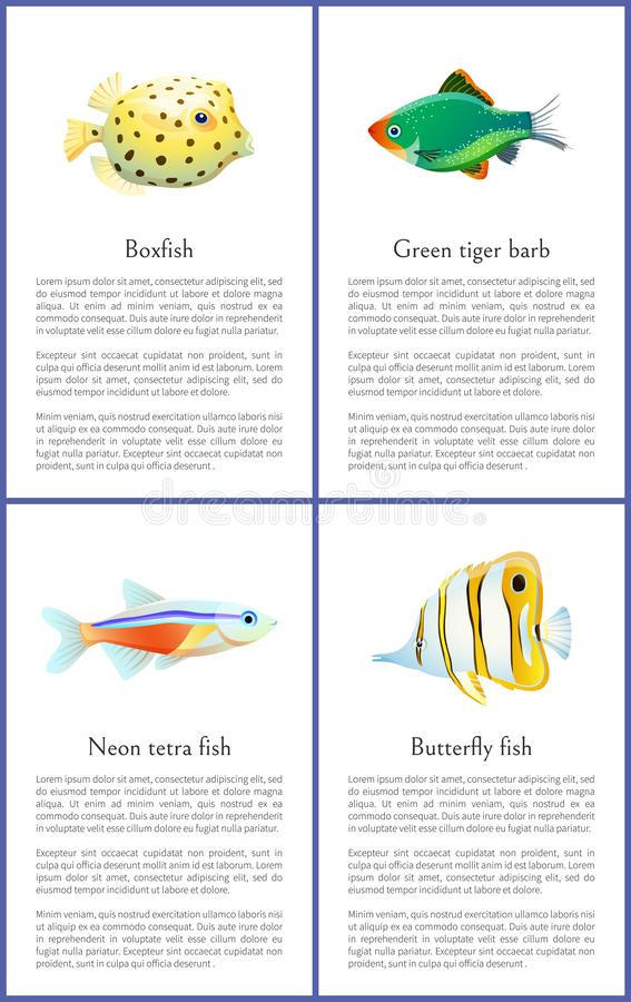 Boxfish and Green Tiger Barb Vector Illustration. Boxfish and green tiger barb, neon tetra and butterfly fish. Set of exotic species posters and headlines, text vector illustration
