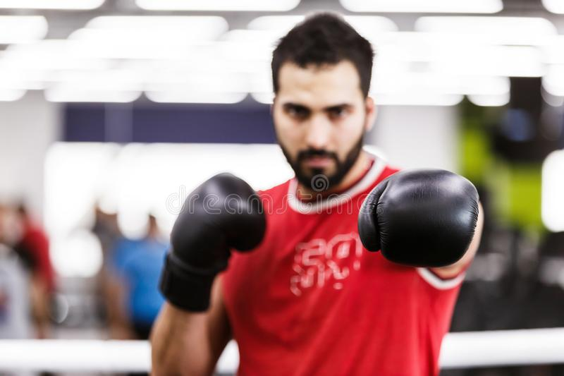 The Boxing Man. Bearded boxing man wears red shirt and black gloves in the ring stock photo