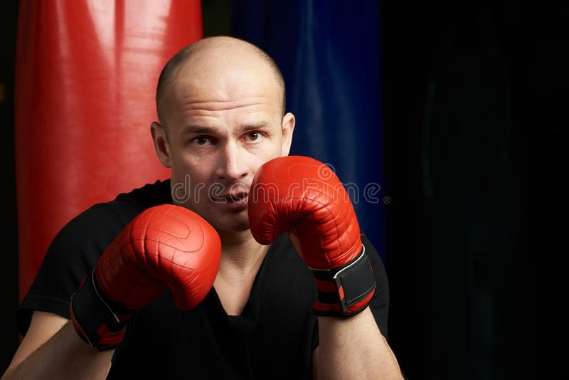 Boxing man portrait. Young bold man in red boxing gloves royalty free stock images