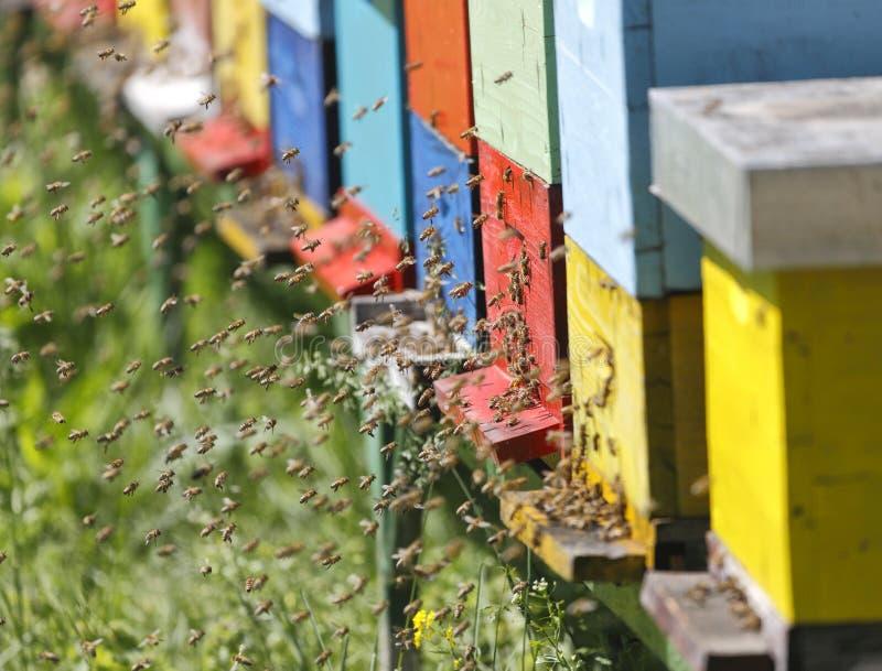 Boxses da colmeia foto de stock