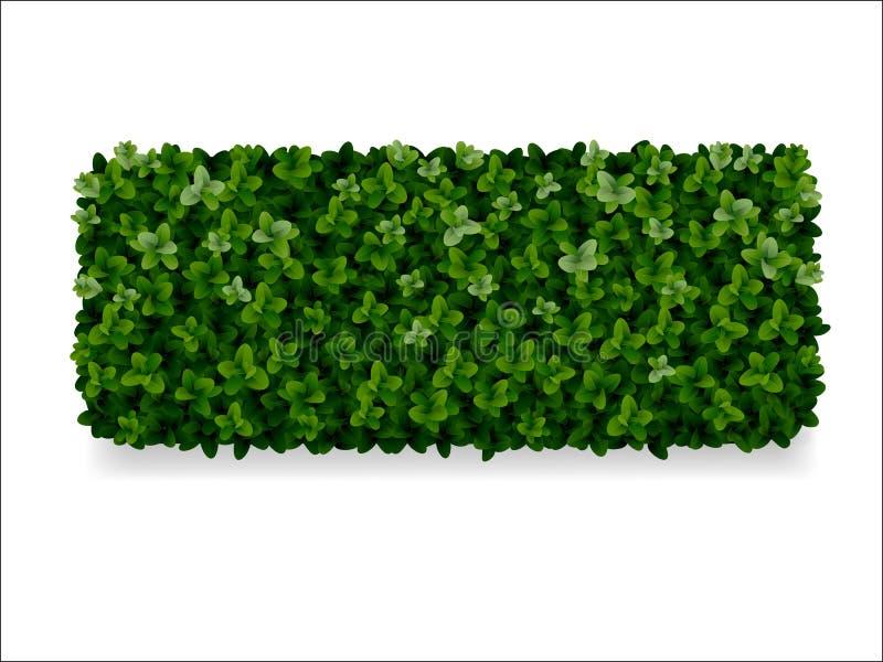 Boxwood dekoracyjny ogrodzenie ilustracji