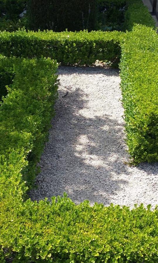 Boxwood Path in Garden royalty free stock photos