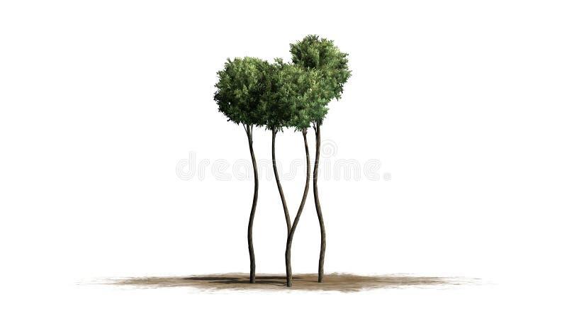 Boxwood Topiary na piaska terenie ilustracji