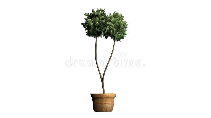 Boxwood Topiary w flancowanie garnku ilustracja wektor