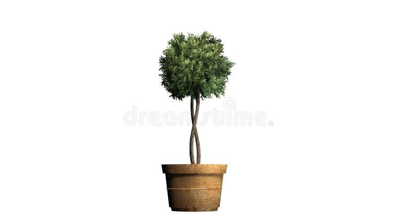 Boxwood Topiary w flancowanie garnku ilustracji