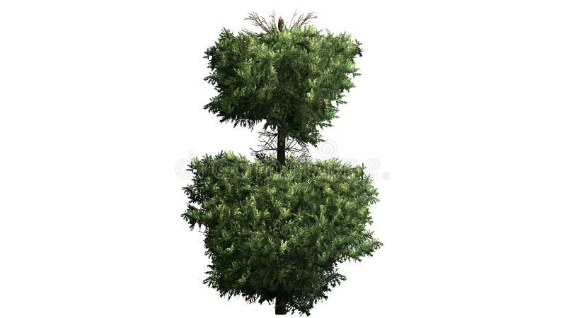 Boxwood Topiary widok szczegółowo ilustracja wektor