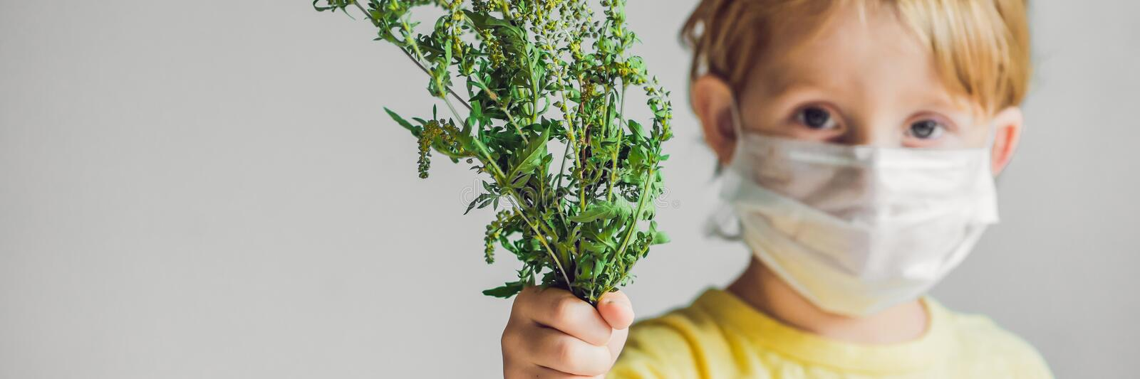 The boy is allergic to ragweed. In a medical mask, he holds a ragweed bush in his hands. Allergy to ambrosia concept. BANNER, long stock photos