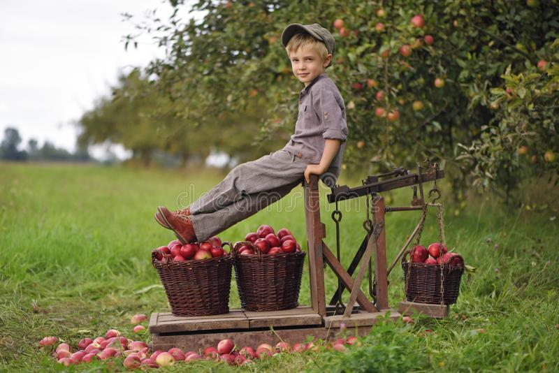 A boy, an apple seller at a market, sits on an old wooden scale. With baskets of red apples. In the background an apple orchard and garden royalty free stock photo