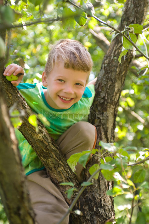 Boy on an apple tree royalty free stock photos