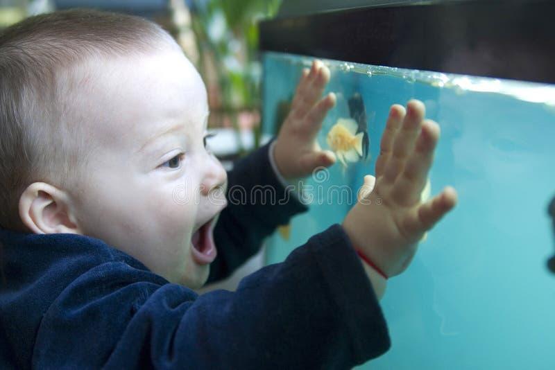 Boy and aquarium stock photo