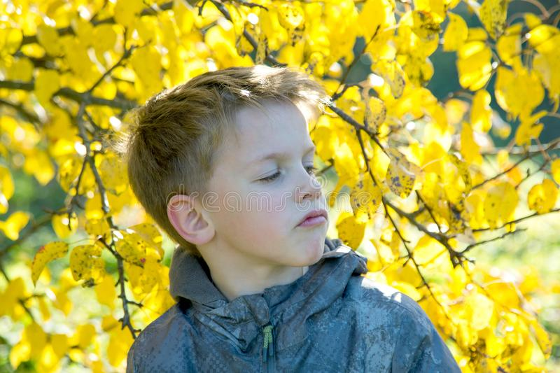 Boy with an arrogant view is surrounded by yellow. Leaves stock photo