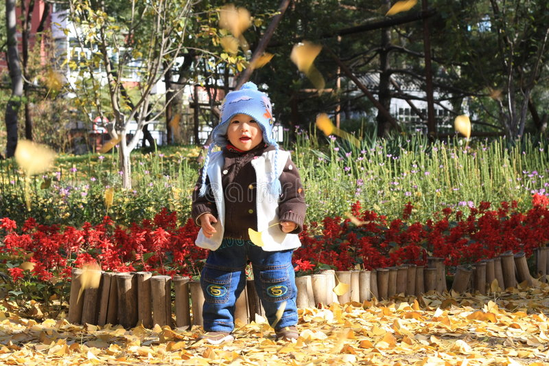 Boy in autumn royalty free stock photography