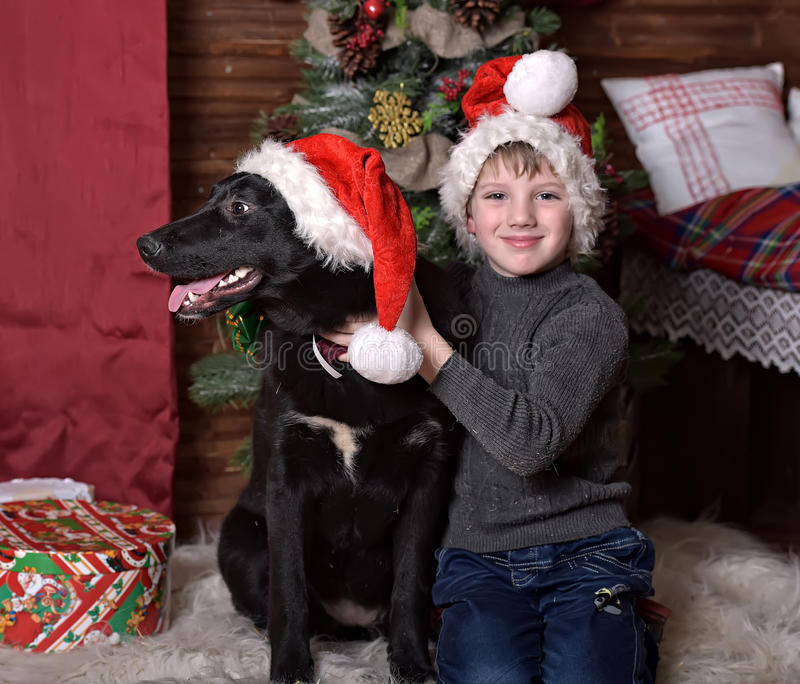 A boy with a black dog in Christmas hats. In Christmas at the Christmas tree royalty free stock photography