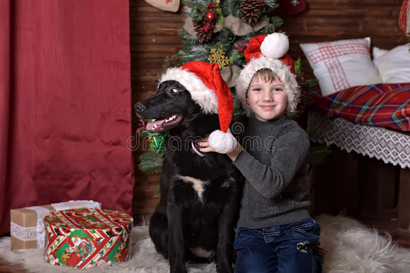 A boy with a black dog in Christmas hats. In Christmas at the Christmas tree royalty free stock images