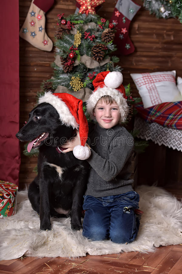 A boy with a black dog in Christmas hats. In Christmas at the Christmas tree royalty free stock photos