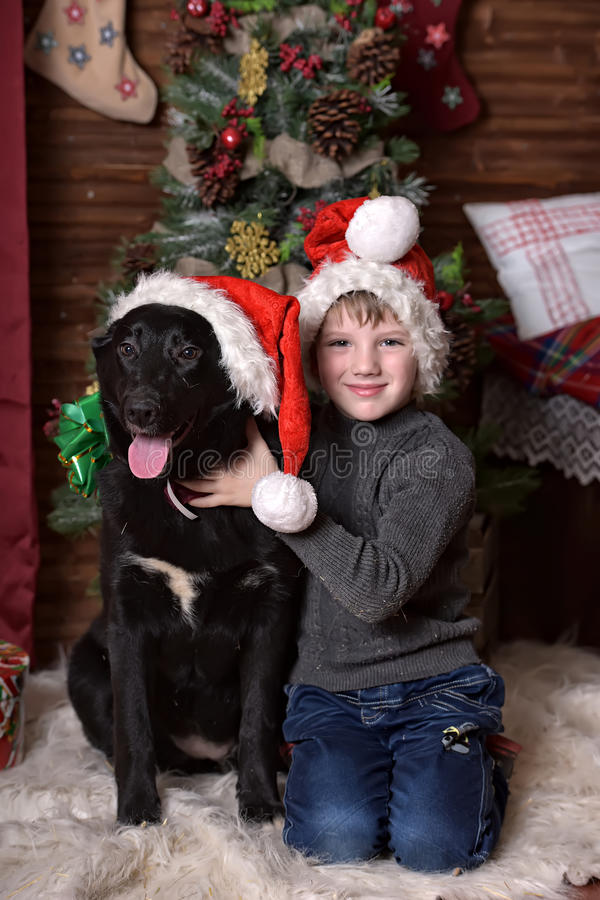 A boy with a black dog in Christmas hats. In Christmas at the Christmas tree stock photos