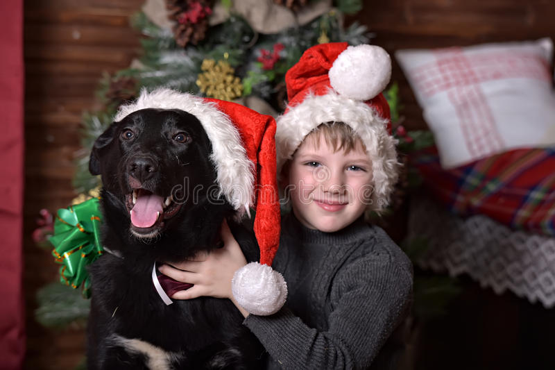 A boy with a black dog in Christmas hats. In Christmas at the Christmas tree stock images