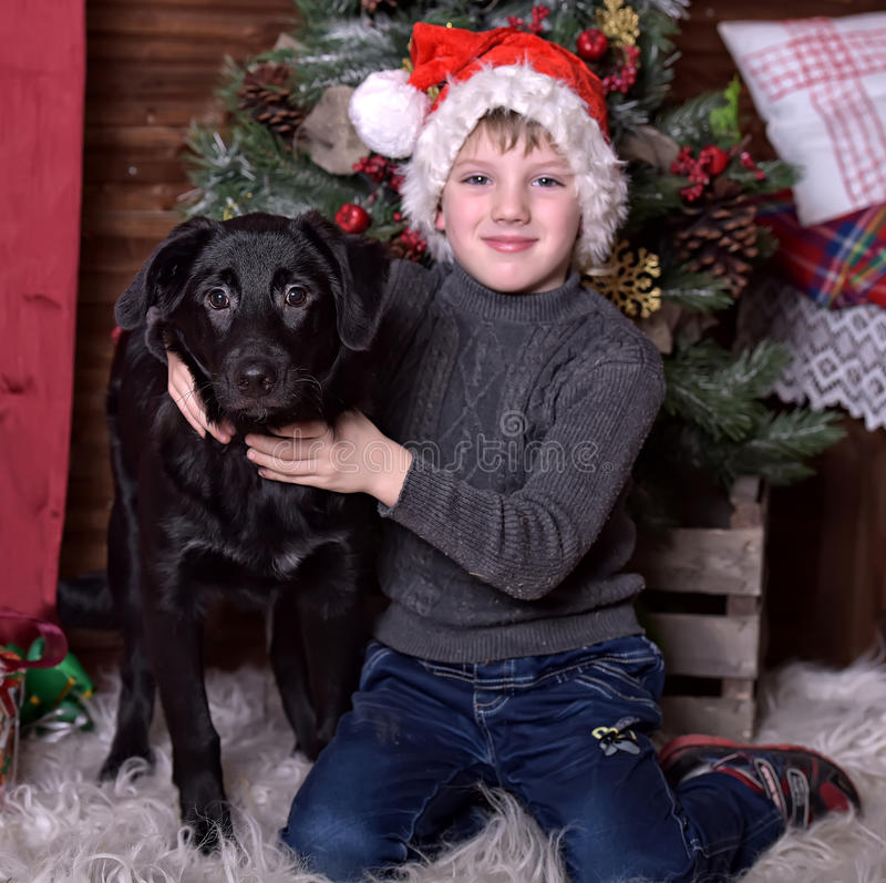 A boy with a black dog in Christmas hats. In Christmas at the Christmas tree stock photography