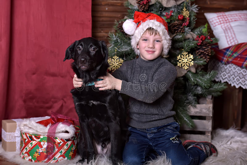 A boy with a black dog in Christmas hats. In Christmas at the Christmas tree stock photo