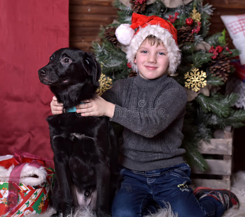 A boy with a black dog in Christmas hats. In Christmas at the Christmas tree royalty free stock photo