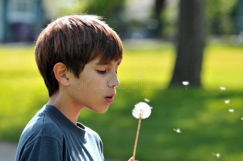 Download Boy blowing a dandelion stock image. Image of flower - 16033307