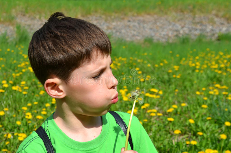 Boy is blowing on a dandelion. On the background of the field of dandelions stock photography
