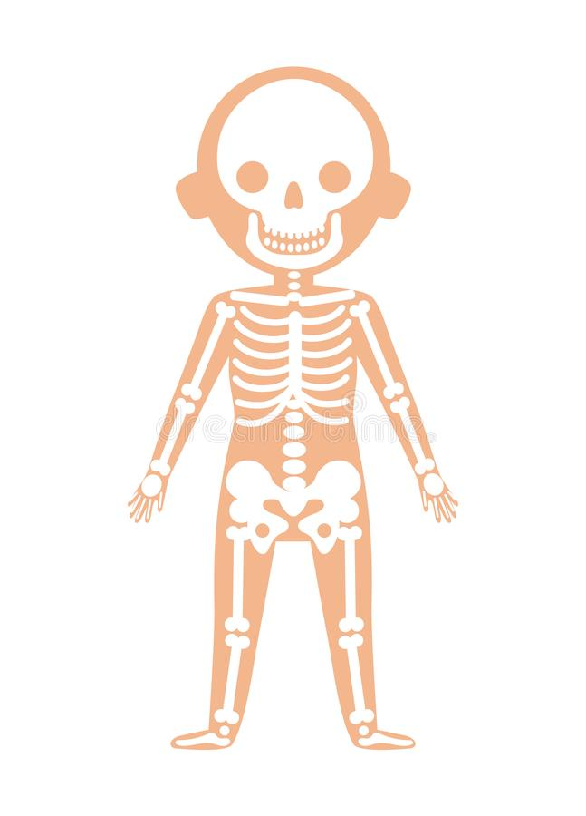 Boy Body Anatomy With Skeleton System Stock Illustration ...