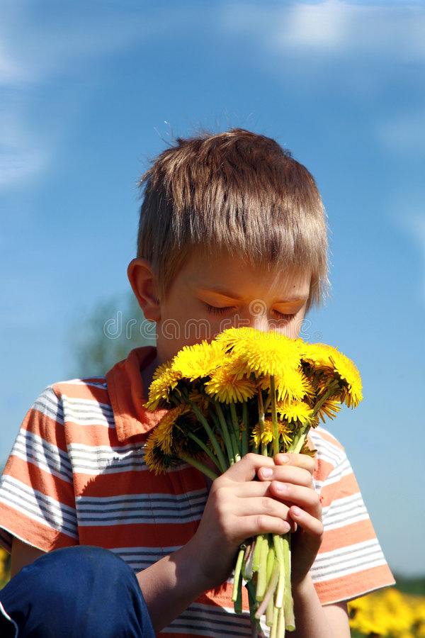 Boy and bunch of dandelions. stock photos