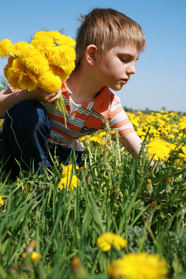 Boy and bunch of dandelions. royalty free stock photos
