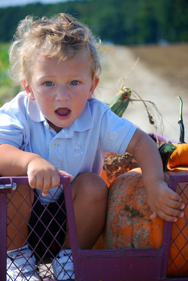Boy in a cart at a pumpkin patch farm royalty free stock photo