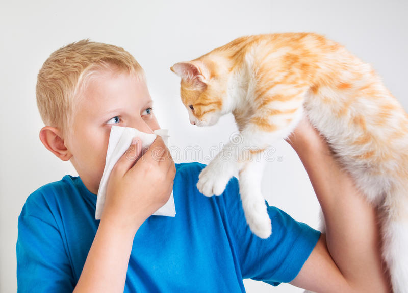 A boy with cat allergy. A boy with a red cat, allergy