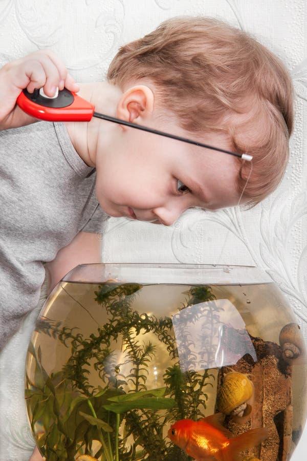 Boy catches fish in aquarium stock images