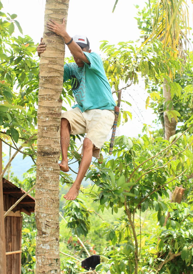 Boy climbing on palmtree royalty free stock photos