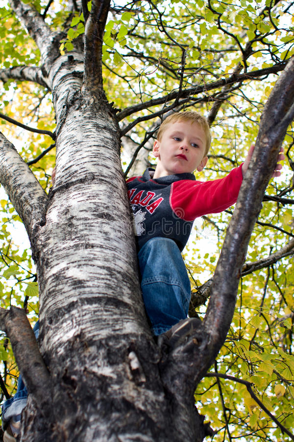 Boy climbing tree royalty free stock photos